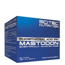 Mastodon | Scitec Nutrition